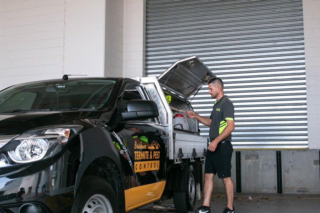 Termite Solutions Brisbane